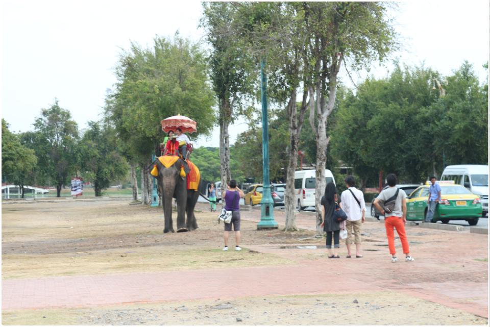 大城里供游客骑玩的大象